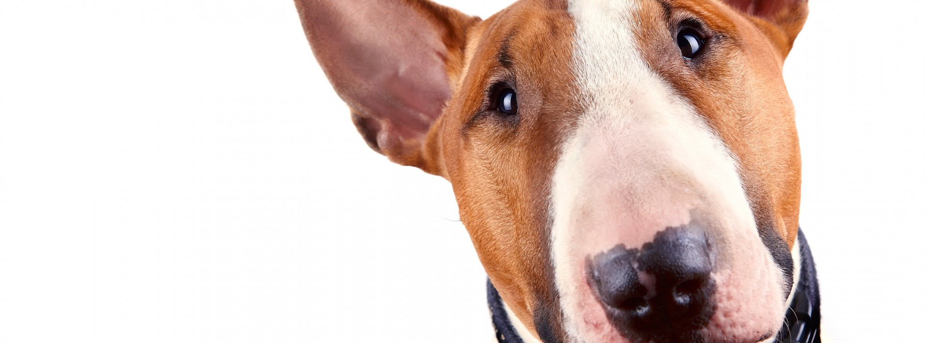 What you need to consider before fighting over Fido