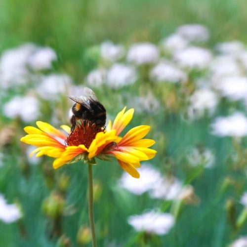 Busy Bee: How Goal-Setting Increases Productivity