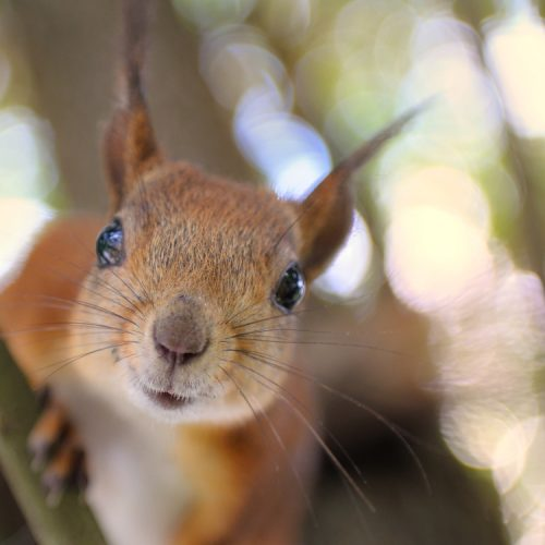 Should Squirrels Have the Right of Way?